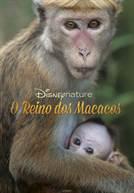 O Reino dos Macacos